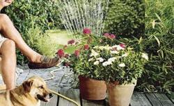 Jak skutecznie podlewać ogród? ABC pielęgnacji roślin